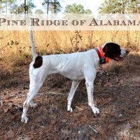 Pine Ridge of Alabama