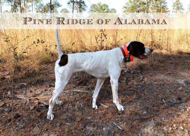 Pine Ridge of Alabama