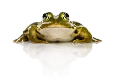 Eat the Frog - Is Your Website the thing you procrastinate?