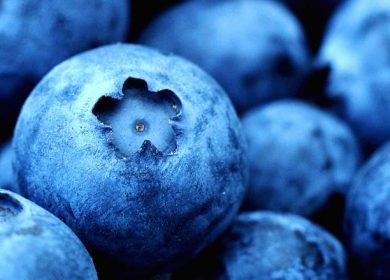 So Blue-tiful - close up blueberries showing Pantone's Classic Blue - 2020 color of the year